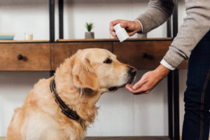 Best Joint Supplement for Dogs for 2021: Complete Reviews With Comparisons
