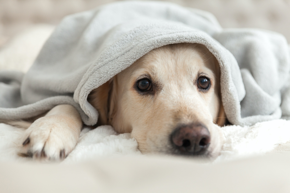 dog arthritis and cold weather