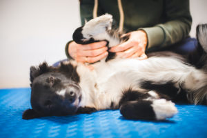 How To Massage a Dog With Arthritis for Pain Relief