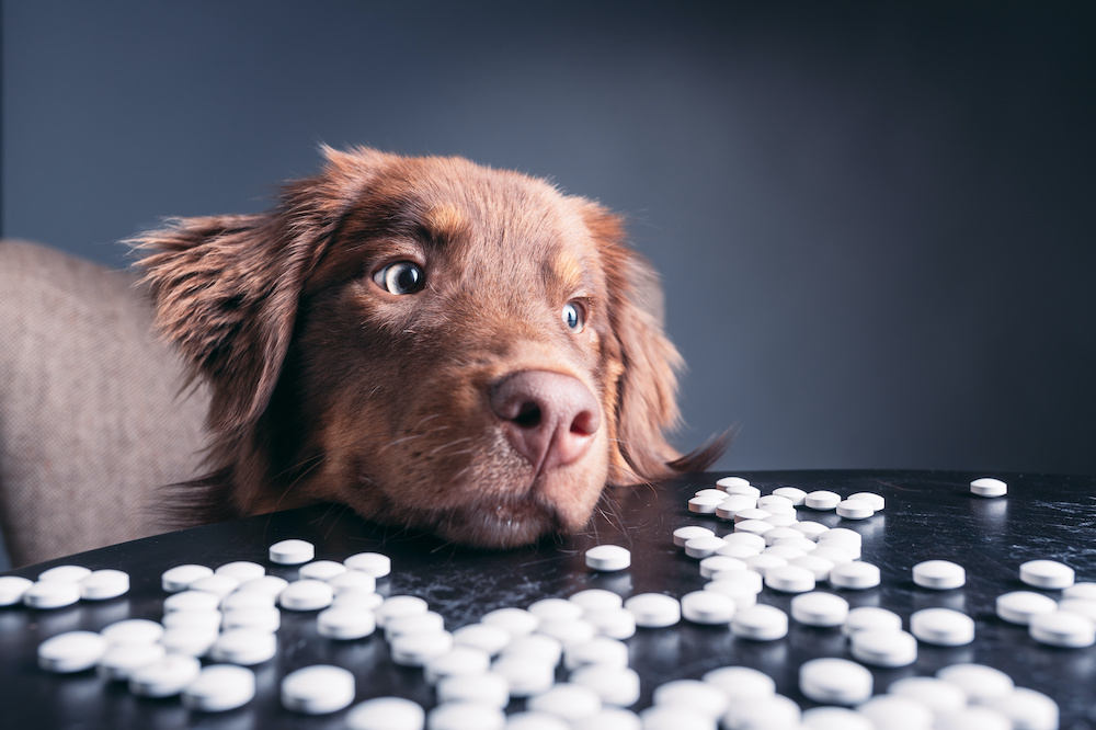on what age should you give dogs joint supplements